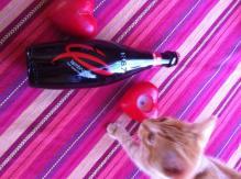 Kitten Likes Lambrusco