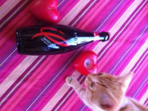 Kitten Likes Lambrusco