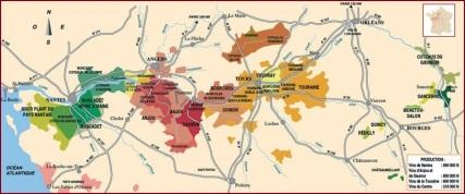 Vineyard_in_the_Loire_Valley