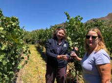 g n g pinot in vineyard
