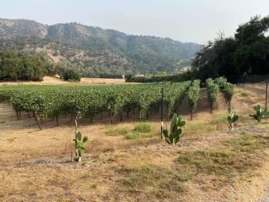 vineyard toward creek