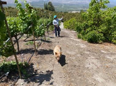 Steve and Cisco at Clos des Amis